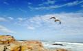 南非签证在线问答汇总